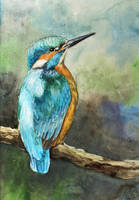 Kingfisher Watercolour by Entar0178