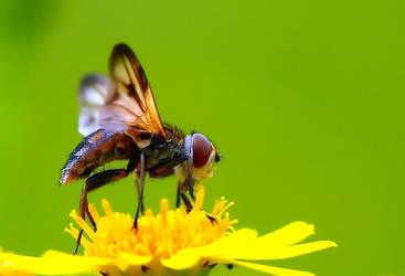 fly by ignosc