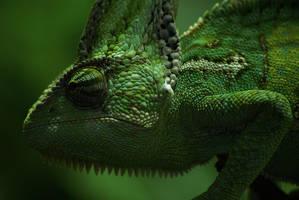 Chameleon by Crutchley29