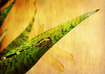 4legged dragonfly by 4dreamer