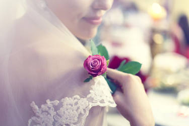 tenderness roses by mechtaniya