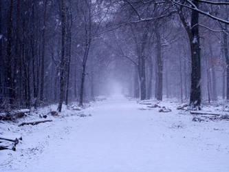 Snowy Wood by Teaton