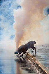 Tear Gas Dog by AriCaFoix