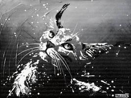 L'enivrant regard du caracal by JessicaSansiquet