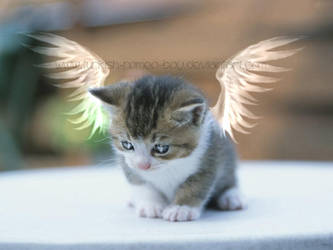 Cutie.Angel.Kitty by Turkish-Romeo-BoY