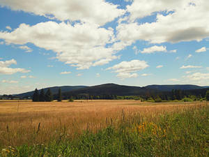 Countryside #3 by Favenatig