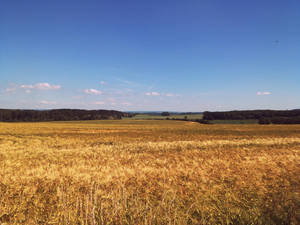 Warm Summer Afternoon #2 by Favenatig