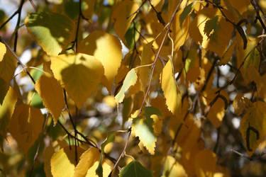 Yellow, green by Printsev