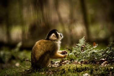 Squirrel monkey by dutchie17