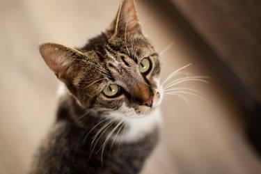 Cat 2 by dutchie17