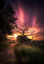 Sunrise dutch national park Sallandse heuvelrug by dutchie17