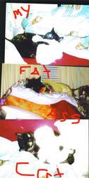 fat ass cat by blood100101