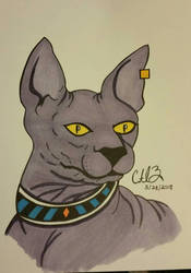 Beerus, the Sphinx House Cat! by Aerith-De-Alexandria