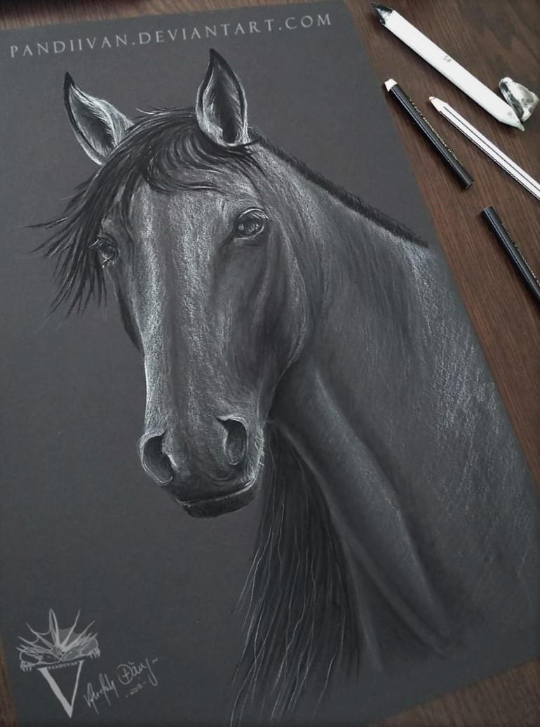 Black Paper Drawing: Horse Portrait. by PandiiVan