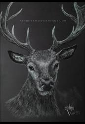 Black Paper Drawing: Deer Portrait. by PandiiVan
