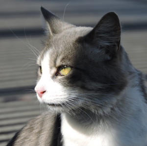 CloudedHeu's Profile Picture