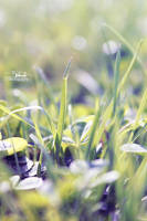 Grass love by Blanchii