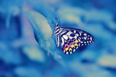 frozen beauty by Blanchii