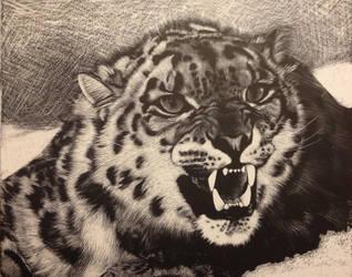 Leopard by westernphilosopher