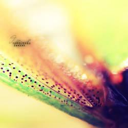 Colorfull II by Zanzak