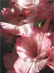 Pink love by angeldream