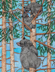 Black Bear by WiccaSmurf