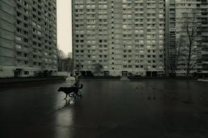 Fear on the city III by djailledie