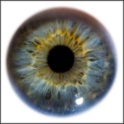 Iris Eye Macro Stock by zpyder