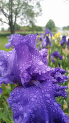 Raindrops from Within by Mattiello