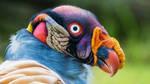 Weird Bird by 19oldman56