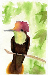 Watercolour Ruby Topaz Hummingbird by kikitr0n