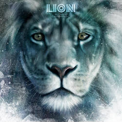 Lion by OCMay
