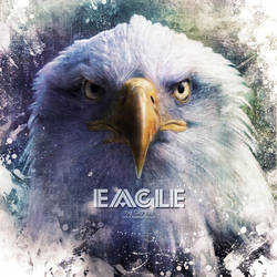 Eagle by OCMay