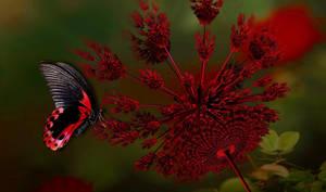 Scarlet Swallowtail Butterfly by marijeberting