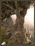Oak in a misty morning by marijeberting