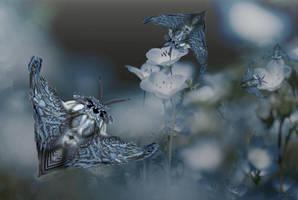 Blue Tiger Moths by marijeberting