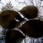 winterleafes by birgzett