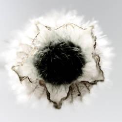seed 1 by birgzett