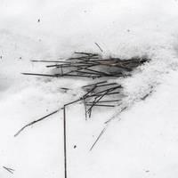not a trace 3 by birgzett