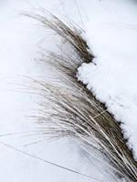 Cold spot by birgzett