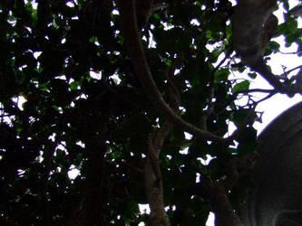 Living in a tree by Cherrysgrl21