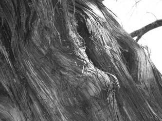the wisdom of a tree by Cherrysgrl21