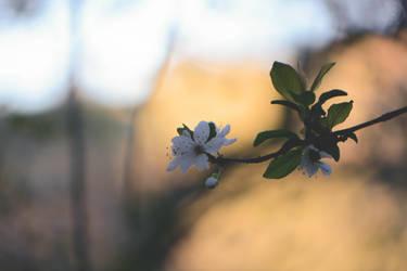 Blossom by WickedOwl514