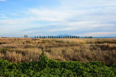 Suisun Marsh by WickedOwl514