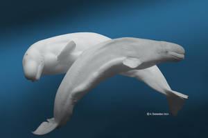 Beluga Whale II by ashamandour