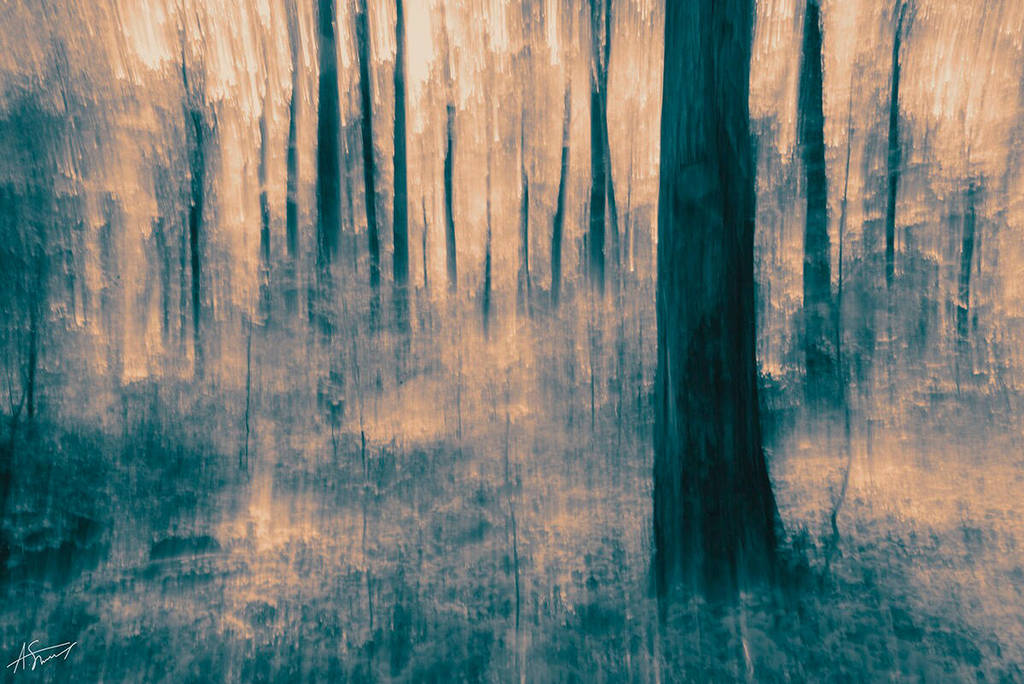 Ghost Forest by ashamandour