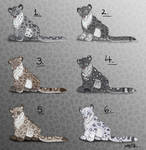 Cub Snow Leopard Male Point Adopts - CLOSED by Nala15
