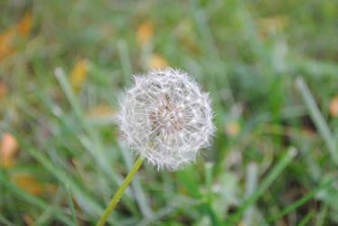 Make a Wish by MatsuKami