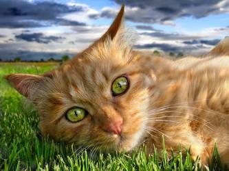 The CAT by sunilk2020