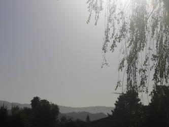 Sky Leaves by rajivm